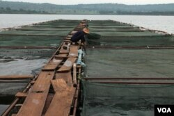 FILE - Fish farming cages are shown on the Nile River in Jinja, Sept. 24, 2013.