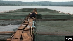 Demonstration fish farming cages on the Nile River in Jinja, Uganda, Sept 24, 2013. (Hilary Heuler/VOA)