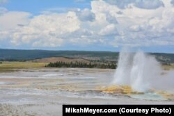 More than half the world's geysers are in Yellowstone National Park.
