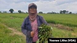 Sumiati Marusin (58) Petani asal desa Toinasa, Kecamatan Pamona Barat, Kabupaten Poso, Sulawesi Tengah. Minggu, (15/11/2020). (Foto: VOA/Yoanes Litha)