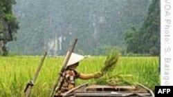 Đan Mạch, UNDP giúp Việt Nam ứng phó với khí hậu biến đổi