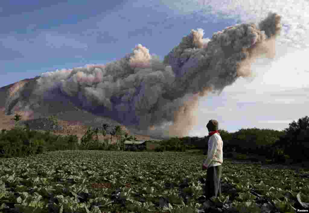 Một người dân đứng trên ruộng bắp cải của mình nhìn về phía Núi lửa Sinabung đang phun tro, nhìn từ làng Pintu Besi ở huyện Karo, tỉnh Bắc Sumatra của Indonesia. Hơn 10.000 người ở 12 ngôi làng lân cận đã rời bỏ nhà cửa và chuyển đến ở các trại tị nạn.