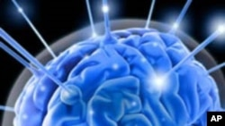 Manjak vitamina B12 dovodi do smanjenja volumena mozga