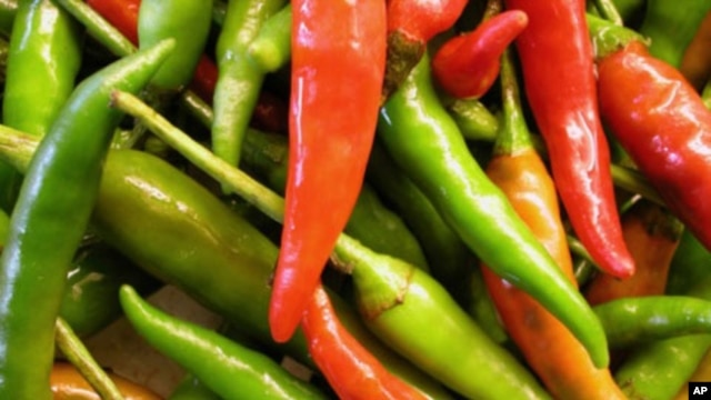 Inspired by chili peppers, researchers are working toward a painkiller that could stop the brain from registering the presence of pain.