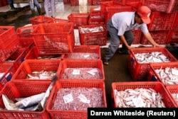 Seorang pria memilah ikan setelah diturunkan dari kapal nelayan setempat di pelabuhan, 14 Mei 2001. (Foto: Reuters/Darren Whiteside)