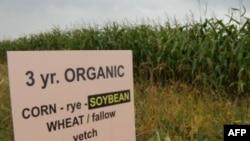 Nova istraživanja pokazuju da organski uzgoj usjeva daje tipično manji prinos od onoga uz pomoć umjetnih gnojiva i pesticida