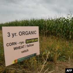 A new study shows organic crops typically yield less than those raised with artificial fertilizers and pesticides