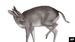 Топ-листа на нови животински и растителни видови