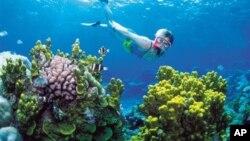 Khu vực rặng san hô Great Barrier Reef