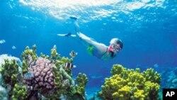 Great Barrier Reef terbentang lebih dari 2.000 kilometer di sepanjang pantai timur laut Australia (foto: Dok).