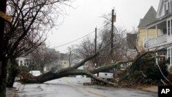 تندباد روز جمعه منجر به واژگون شدن درختان در بسیاری از مناطق شرقی امریکا شده است.
