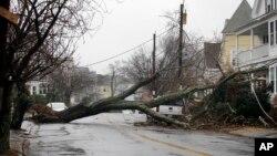 Sebuah pohon besar tumbang dan menimpa kabel jaringan listrik di Swampscott, Massachusetts, setelah angin dengan kecepatan tinggi melanda pantai timur AS, Jumat (2/3).