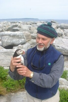 It took eight years from the time Stephen Kress moved the first first puffin chicks to Eastern Egg Rock until the first nesting pair appeared in 1981.