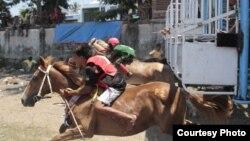 Pacuan kuda tahun ini diikuti 682 ekor kuda. Satu joki bisa berlomba beberapa kali. (Courtesy: Max FM Waingapu)
