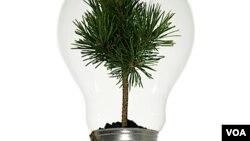El año próximo, el resto del país deberá cambiar las bombillas incandescentes por las más eficientes.