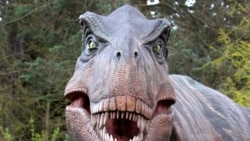 Science in a Minute: How Many T-Rexes Lived in North America?