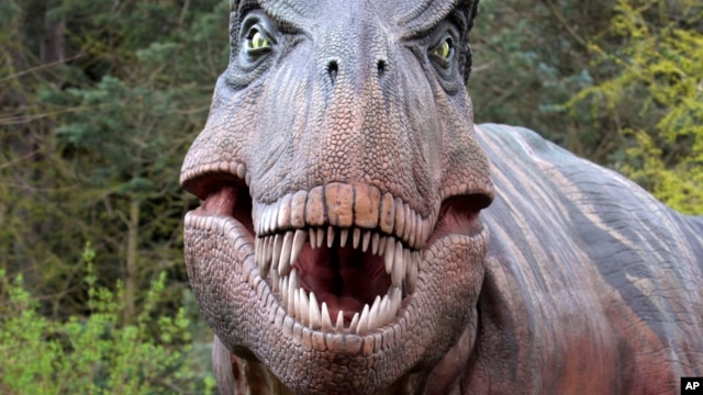 FILE - Tyrannosaurus rex dinosaur replica at the Woodland Park Zoo in Seattle, Washington
