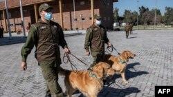 Abapolisi bo muri Chile batoza imbwa kureha virusi ya Corona