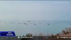 Peshkatarët e Koresë së Jugut akuzojnë Kinën për shkelje të normave të peshkimit