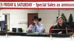On the Job: Auctioneer