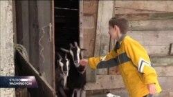 """Dječak Amer iz sela kod Bratunca: """"Nisam ja više mali za igračke, sada skupljam ovce"""""""