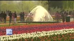 کشمیر میں 'گل لالہ' کا باغ