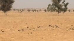 ADAMAWA: 'Yan Boko Haran Sun Haddasa Kwararowar Hamada