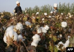 FILE - Migrant workers pick cotton in a field in Korla, Oct. 10, 2006, in a town on the edge of the Tarim Basin and the Taklamakan Desert, south of Urumqi, capital of China's far west Xinjiang Uighur Autonomous Region.