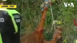Ý: Giải cứu chú ngựa mắc kẹt trong nghĩa trang