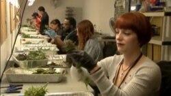 Legalizirana marihuana u saveznoj državi Arkansas