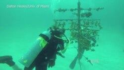 Scientists Toughening Coral Against Climate Change