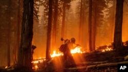 Para petugas pemadam kebakaran berusaha memadamkan kebakaran North Complex Fire di Hutan Nasional Plumas, California, 14 September 2020.