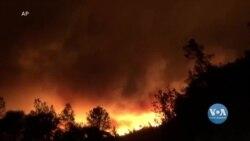 У Каліфорнії горять виноробні райони. Відео