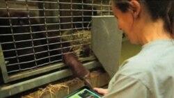 Орангутаните во Вашингтон со ајпед