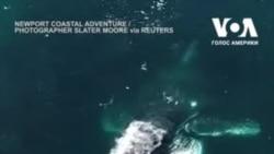 Кит кружляв біля човна поблизу узбережжя Каліфорнії. Відео
