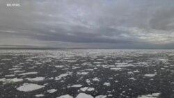 气候暖化北极海冰急剧缩减 动物恐将无家可归