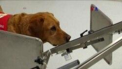 Perros para detectar el cáncer de próstata