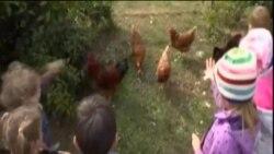 საბავშვო ბაღი ფერმაში