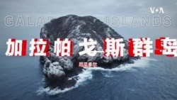 心碎太平洋:中国渔船,捕光我们的鱼,污染我们的家