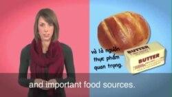 Thành ngữ tiếng Anh thông dụng: Bread and Butter (VOA)