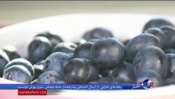 خواص بلوبری در درمان بیماران سرطانی؛ میوه ای کمیاب در ایران