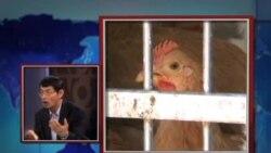 世界媒体看中国:禽流感再现