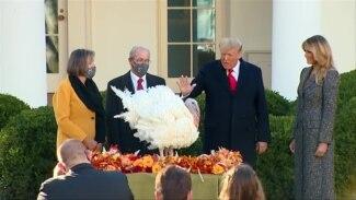 感恩节前夕 特朗普总统赦免两只火鸡
