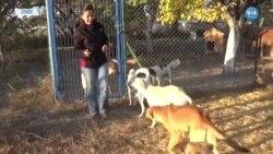 Türkiye'de Hayvanseverler Yasayı Yeterli Bulmuyor