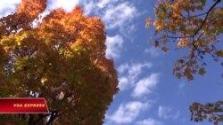 Vườn thực vật quốc gia Washington DC - Khu rừng giữa thủ đô