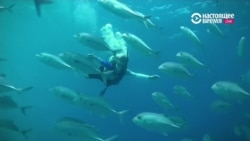 Цена подводного бизнеса