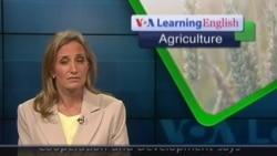 Anh ngữ đặc biệt: US Farm Subsidies (VOA)