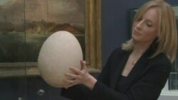 Christie's Displays Rare, Fossilized Egg of Extinct Elephant Bird