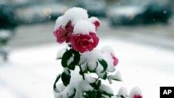 Hasta un metro de nieve cayó en la península al norte de Michigan, cuyas temperaturas se desplomaron hasta los -6 grados C en la mañana del miércoles.