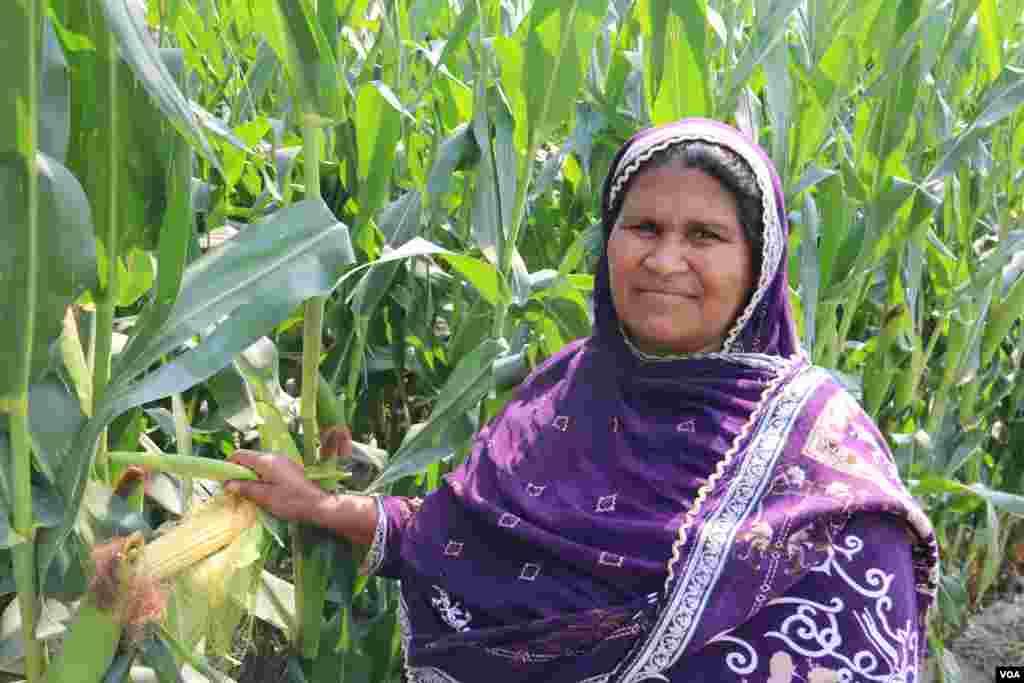 فصلوں کی کٹائی کے عمل میں خواتین بھی شریک ہوتی ہیں۔ ان خواتین کو روزانہ کی بنیاد پر اجرت دی جاتی ہے۔